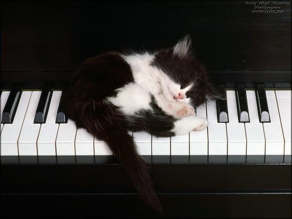 Classical Music  🐱